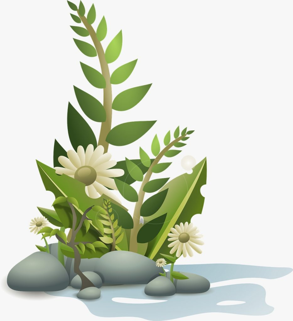 plant with white flower- reap into nature
