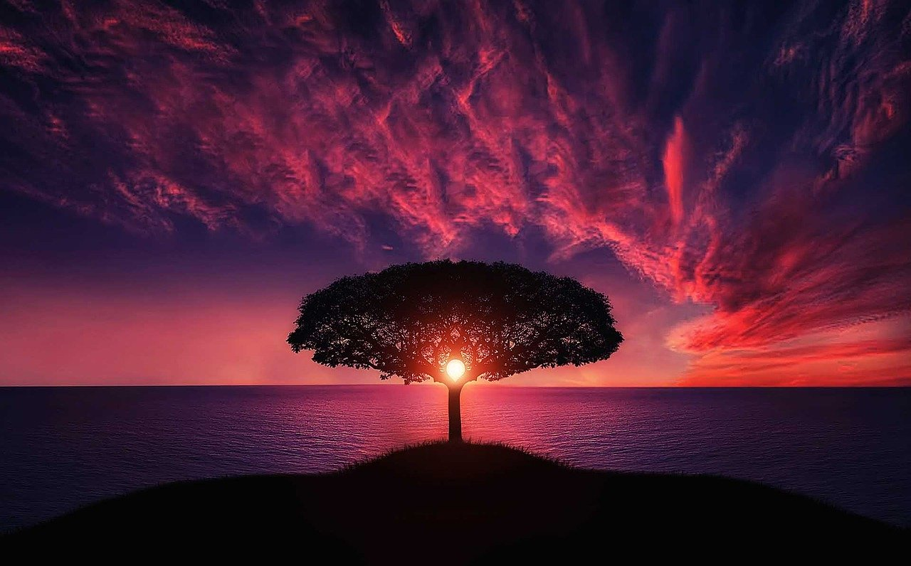a tree near a sea with red clouds